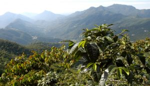 single origin coffee farm in the mountains