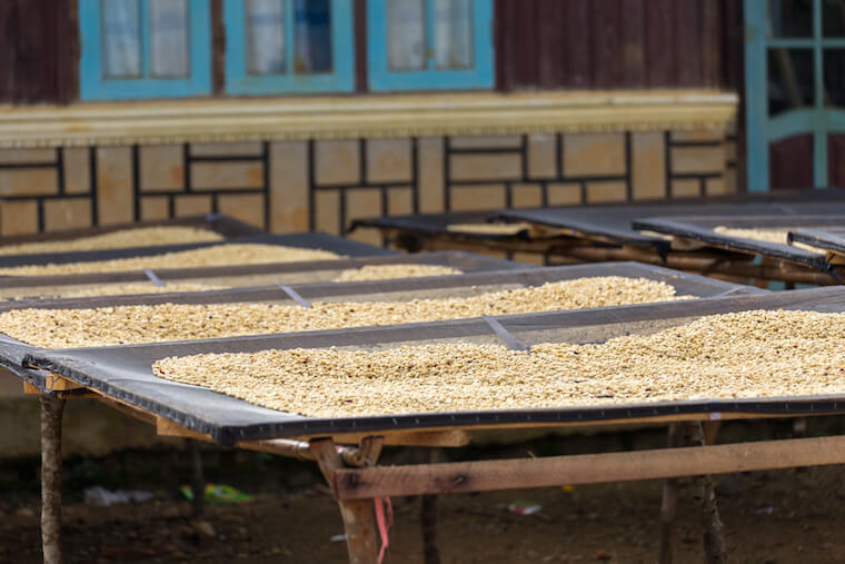 coffee being dried in Vietnam